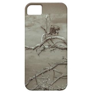 Geier an der Spitze Leaveless Baums iPhone 5 Schutzhüllen
