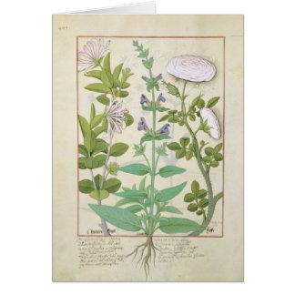 Geißblatt, Salbei und Rose Karte