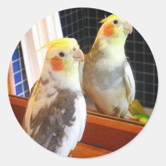 Geisterbild des feinen schauenden Parakeet Runder Aufkleber
