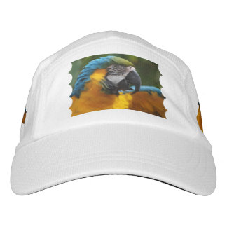 Gekräuselter Blauund GoldMacaw Headsweats Kappe