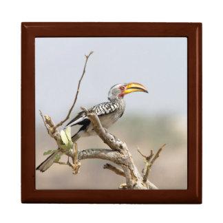 Gelb berechneter Hornbill Erinnerungskiste