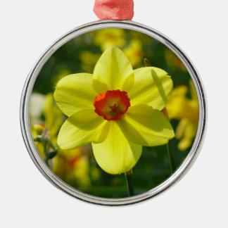 Gelb-orangee Narzisse 02.0_. Rundes Silberfarbenes Ornament