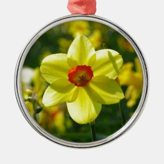 Gelb-orangee Narzissen 02.1g Rundes Silberfarbenes Ornament