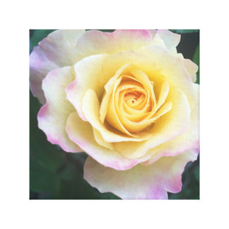 Gelb u. Rosa Leinwanddruck