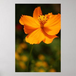 Gelbe Blume Posterdruck