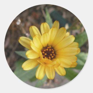 Gelbe Blumen-kleiner Aufkleber
