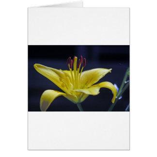 Gelbe Blumen-Lilie Grußkarte