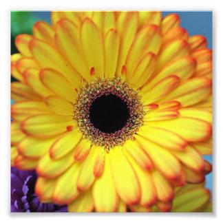 Gelbe Blumen-photographischer Druck