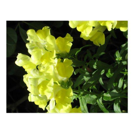 Gelbe blumen postkarte zazzle for Gelbe tafel