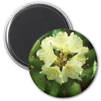 Gelbe Blumen Runder Magnet 5,1 Cm