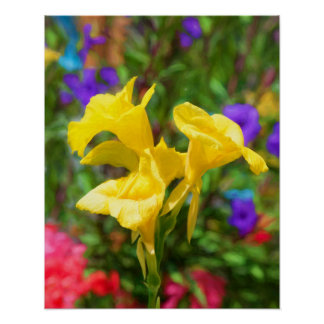 Gelbe Canna Lilie Poster