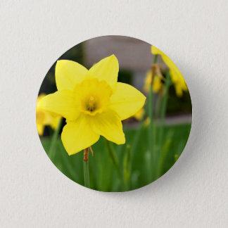 Gelbe Freude-Frühling Narzisse Runder Button 5,7 Cm
