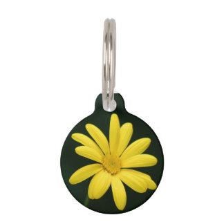 Gelbe Gänseblümchen-Blume Haustiermarke