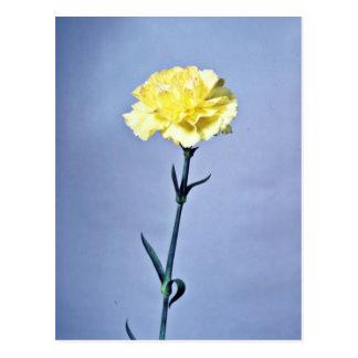 Gelbe Gartennelken-Blumen Postkarten