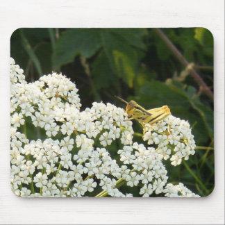 Gelbe Heuschrecke auf einer weißen Mousepad