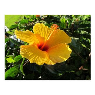 Gelbe Hibiskus-Blumen-Postkarte Postkarte