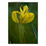 Gelbe Iris-Anmerkungs-Karte Mitteilungskarte