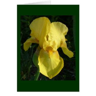 Gelbe Iris Karte