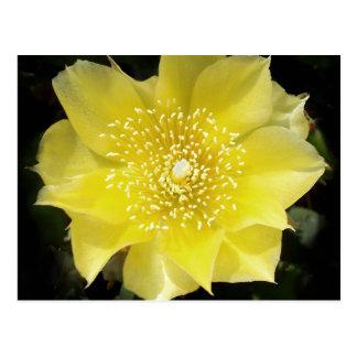 Gelbe Kaktus-stachelige Birnen-Blume Postkarte