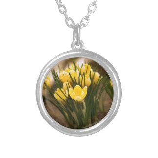 Gelbe Krokus-erste Frühlings-Blume Versilberte Kette