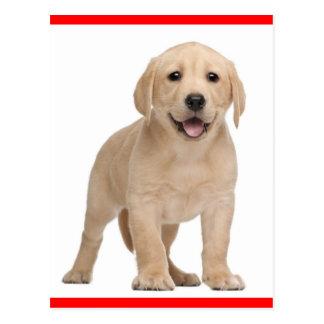Gelbe Labrador retriever-Hündchen-Postkarte Postkarte