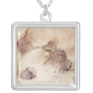 Gelbe Labrador retriever-Welpen, 10 Tage alt Versilberte Kette