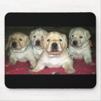 Gelbe Labrador retriever-Welpen ~ Mausunterlage Mousepad