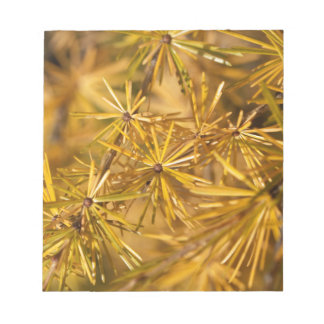 Gelbe Lärchennadeln (Larix Decidua) Notizblock