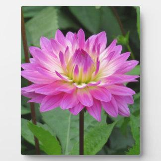 Gelbe lila Dahlie Fotoplatte