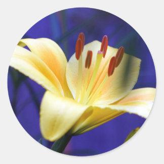 Gelbe Lilie Sticker