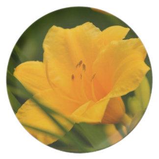 Gelbe Lilie in der Blüte Party Teller