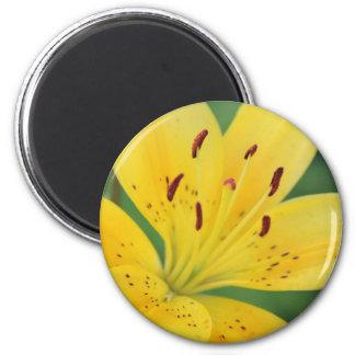 Gelbe Lilie Runder Magnet 5,7 Cm