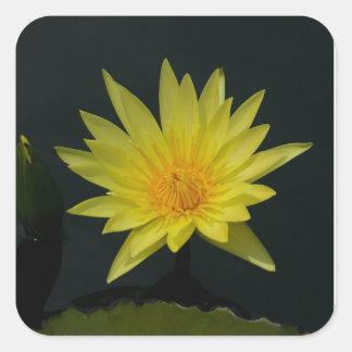 Gelbe Lotos-Wasserlilie Quadratischer Aufkleber