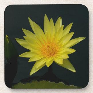 Gelbe Lotos-Wasserlilie Untersetzer