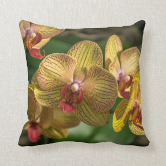 Gelbe Orchideen herauf nahes Throwkissen Kissen