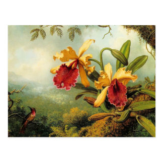 Gelbe Orchideen Postkarte