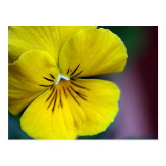 Gelbe Petunie-Blume Postkarte