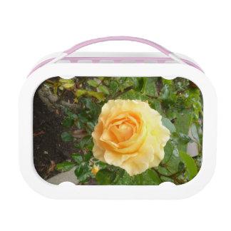 Gelbe Rose Brotdose