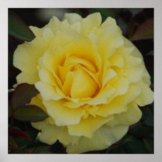 Gelbe Rose des Freude-Plakats Poster