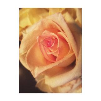 Gelbe Rose Leinwanddruck