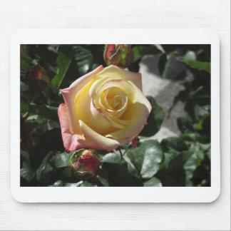 Gelbe Rosen-Blume des Singles im Frühling Mousepad