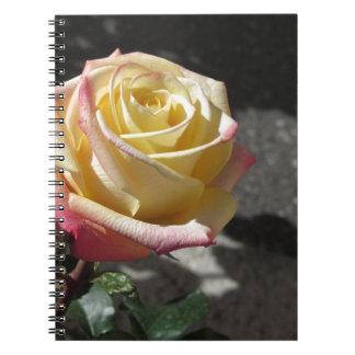 Gelbe Rosen-Blume des Singles im Frühling Spiral Notizblock