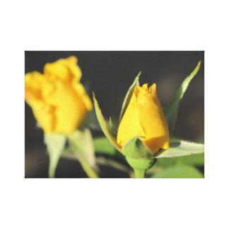 Gelbe Rosen Leinwanddruck