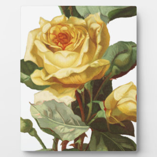 Gelbe Rosen-Plakette Fotoplatte