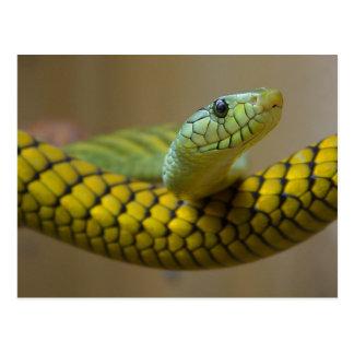 Gelbe Schlange Postkarte