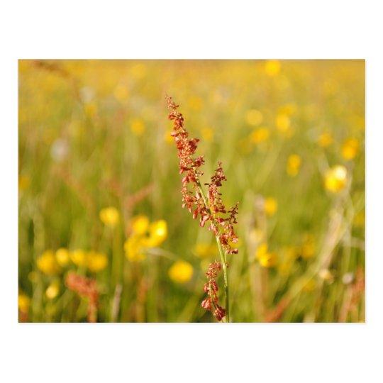 Gelbe Sommerwiese Postkarte