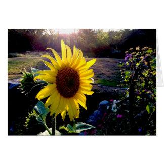 Gelbe Sonnenblume am Sonnenuntergang --- Karte