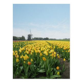 Gelbe Tulpe-Blumen Feld u. Windmühle Holland Postkarte