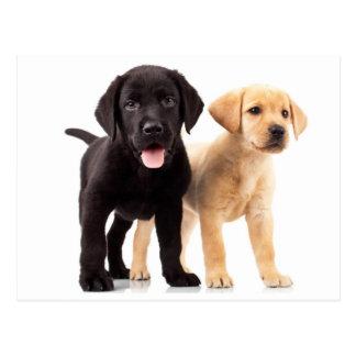 Gelbe u. schwarze Labrador Postkarte