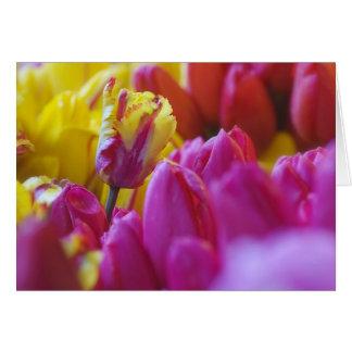 gelbe und rosa Tulpen Karte